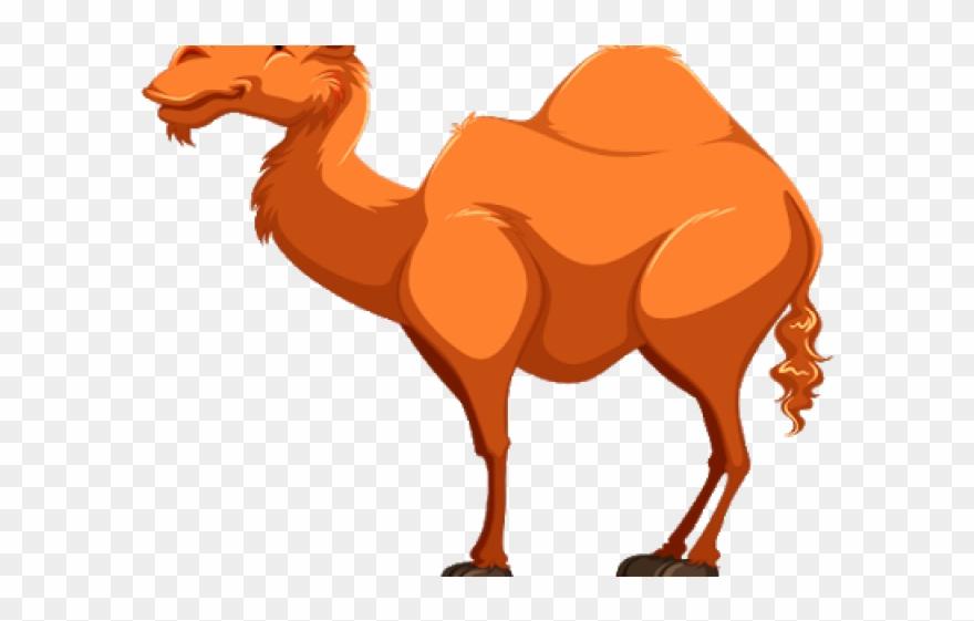 camel # 4935791