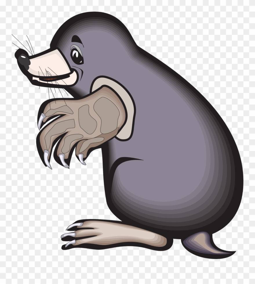 mole # 5056309