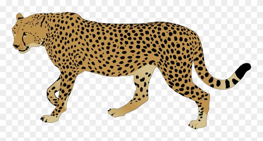 cheetah # 5156725