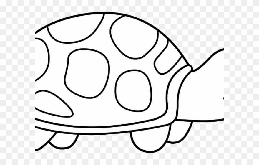 turtle # 4873734