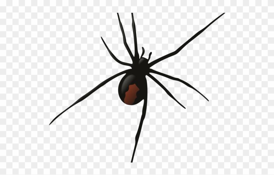 spider # 4894422