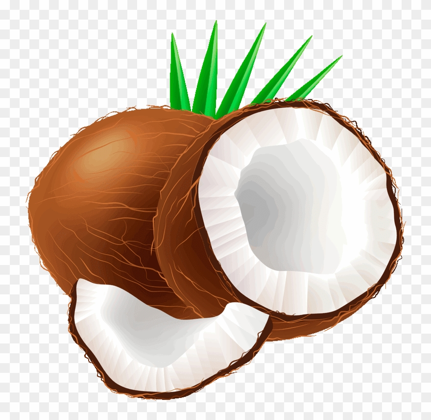 coconut # 4895322