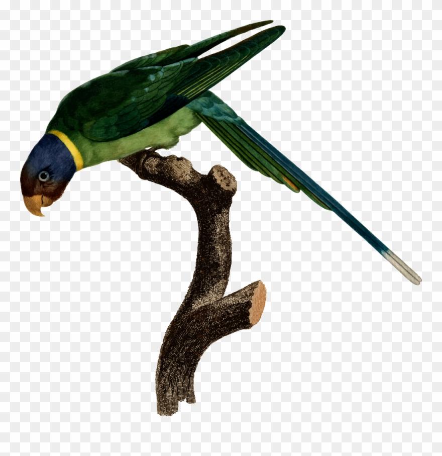 parrot # 4939832