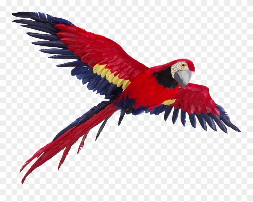 parrot # 4939829