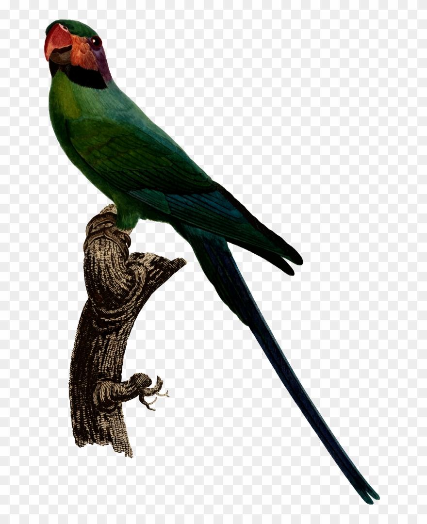 parrot # 4939830