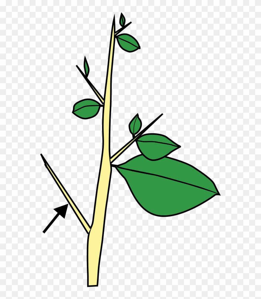 plant-stem # 4903483