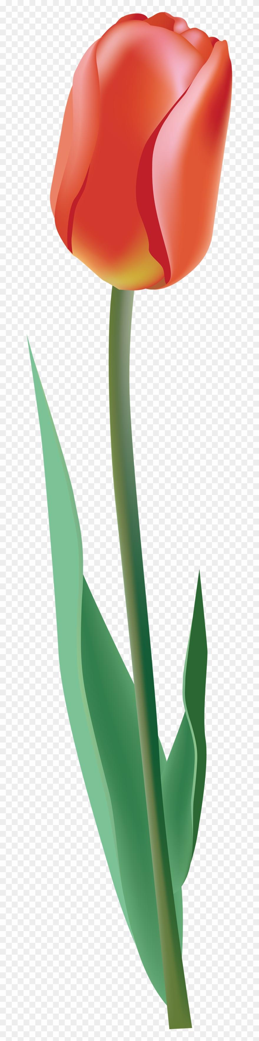 tulip # 4905766