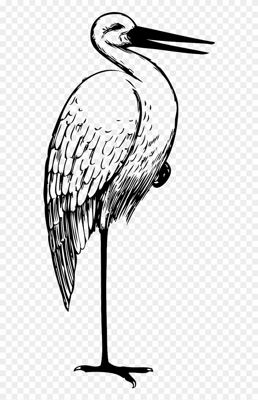 stork # 4927369