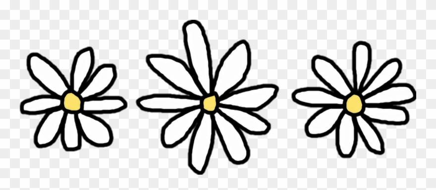 daisy # 4918434