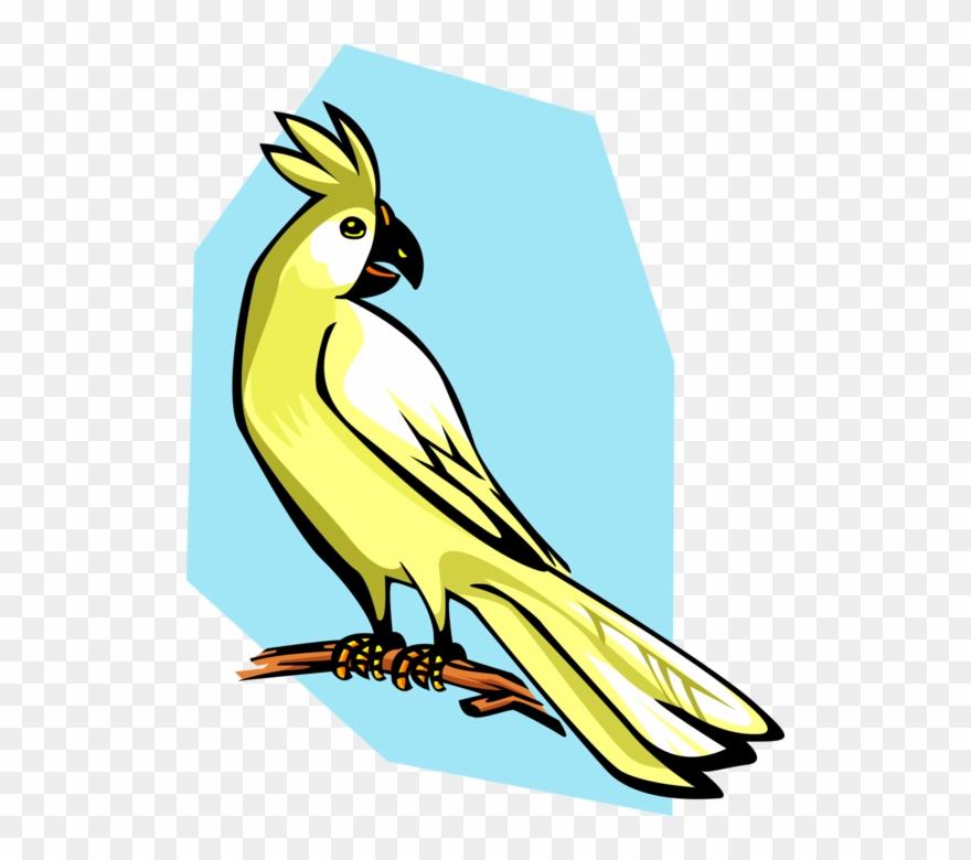 parrot # 4943853