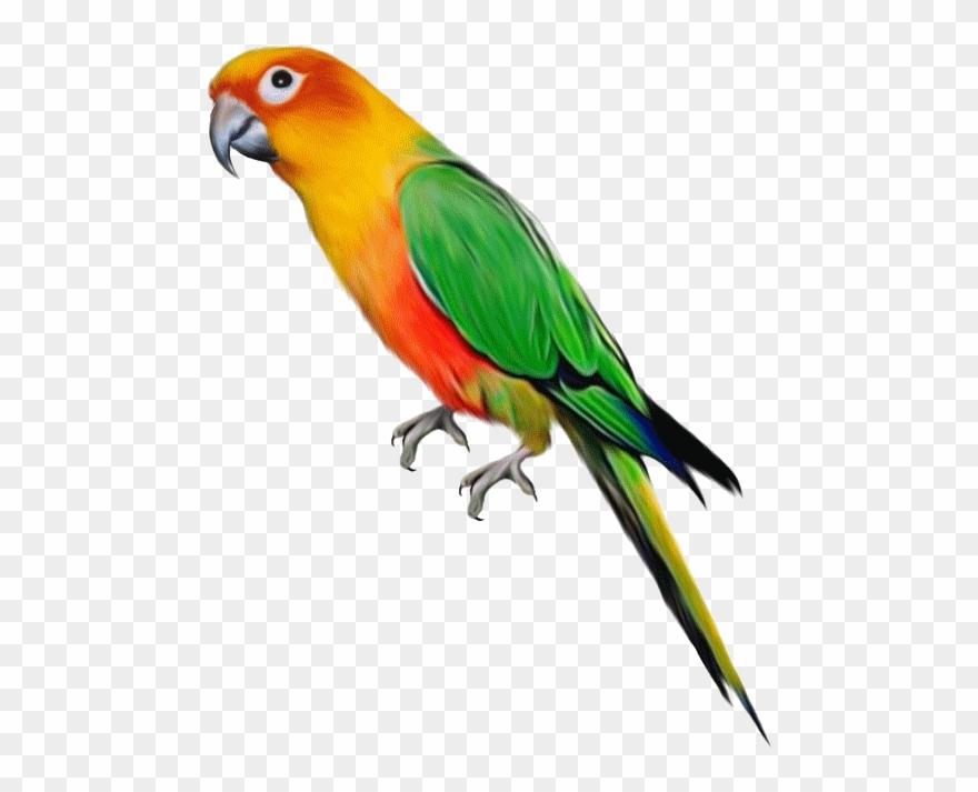 parrot # 4941943