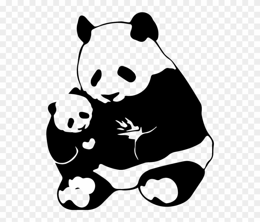 red-panda # 5248437