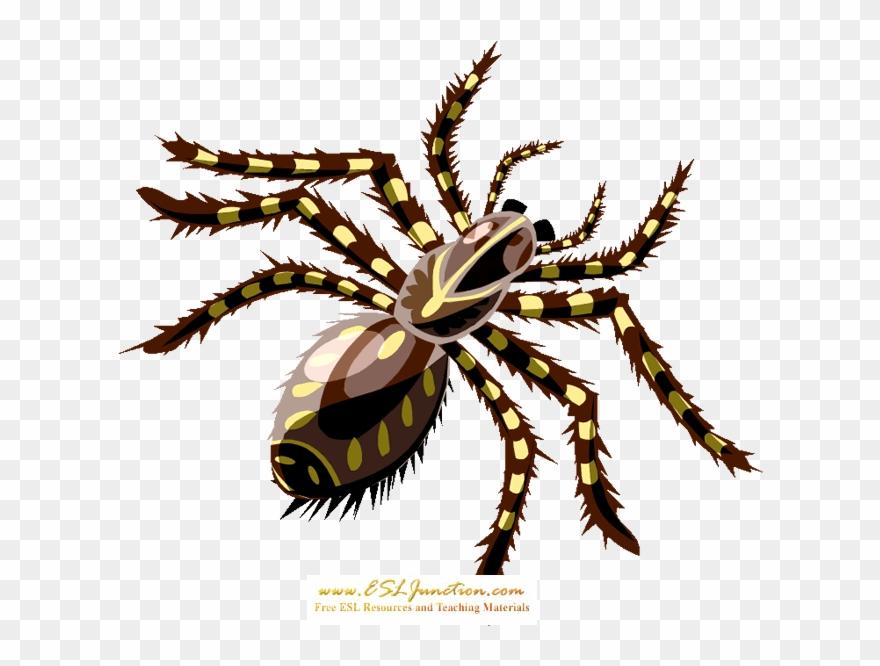 spider # 5245438