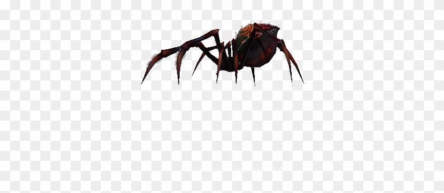 spider # 5245711