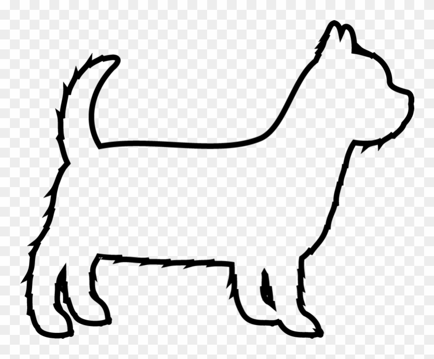 yorkshire-terrier # 5269271