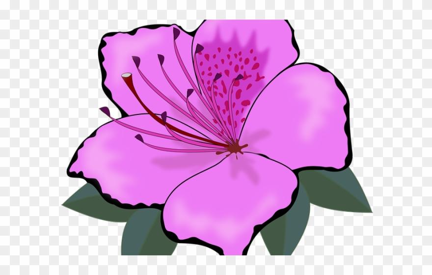 lotus # 4890814