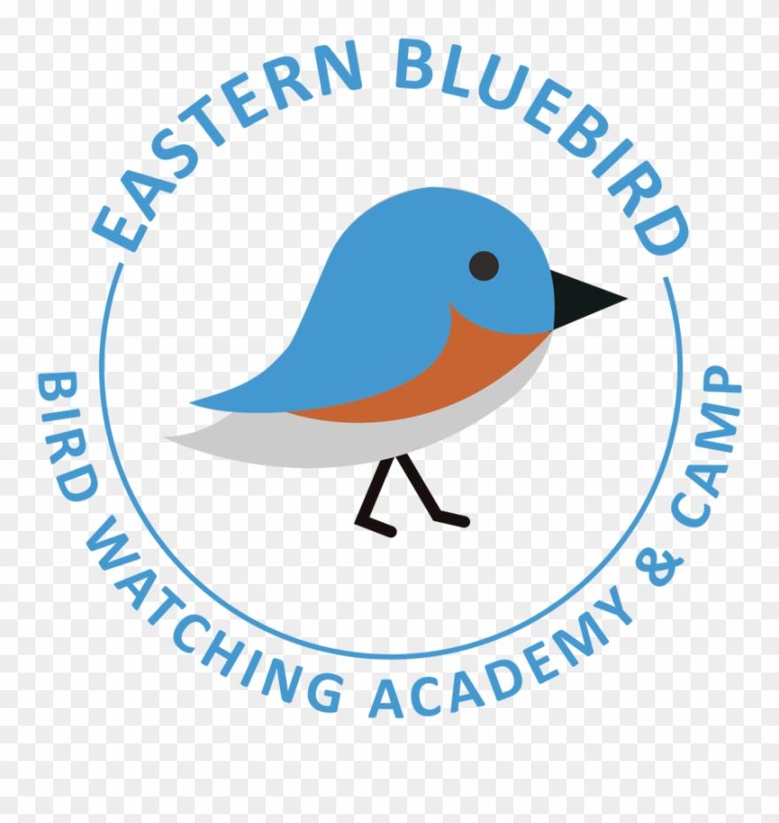 eastern-bluebird # 4889759