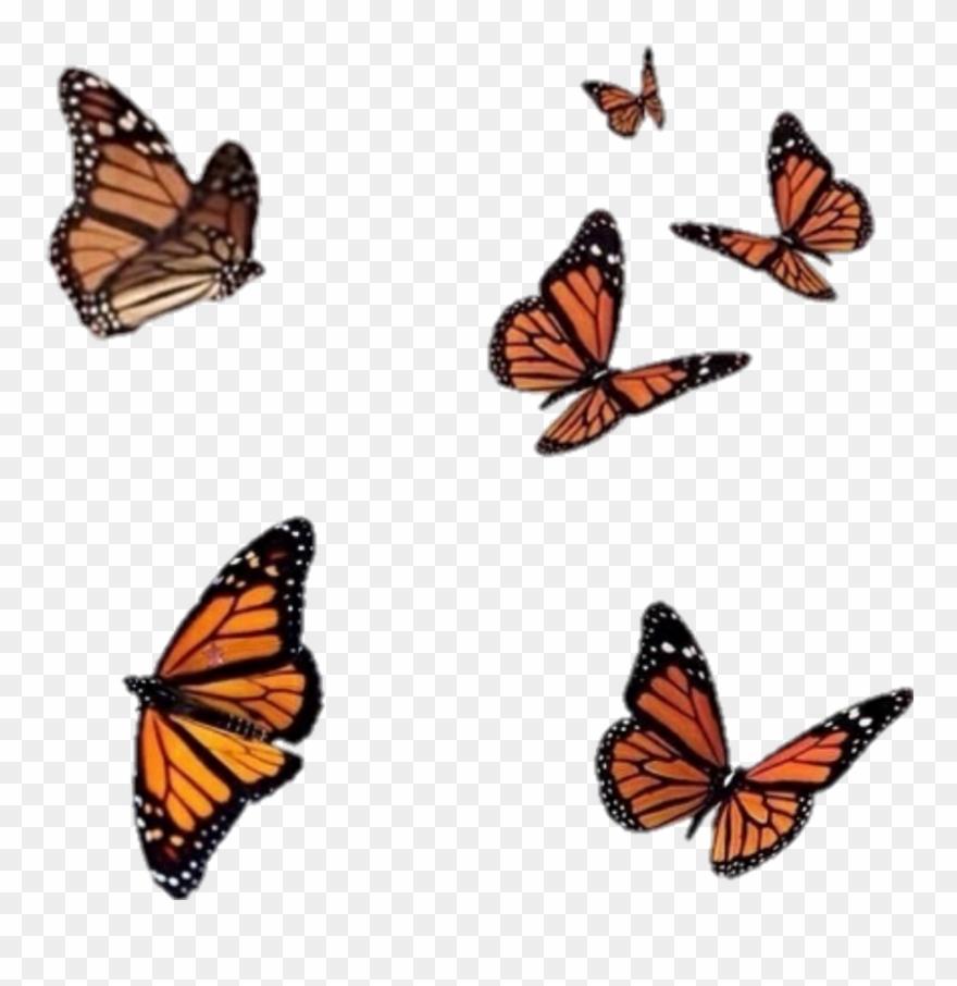 orange # 4876403