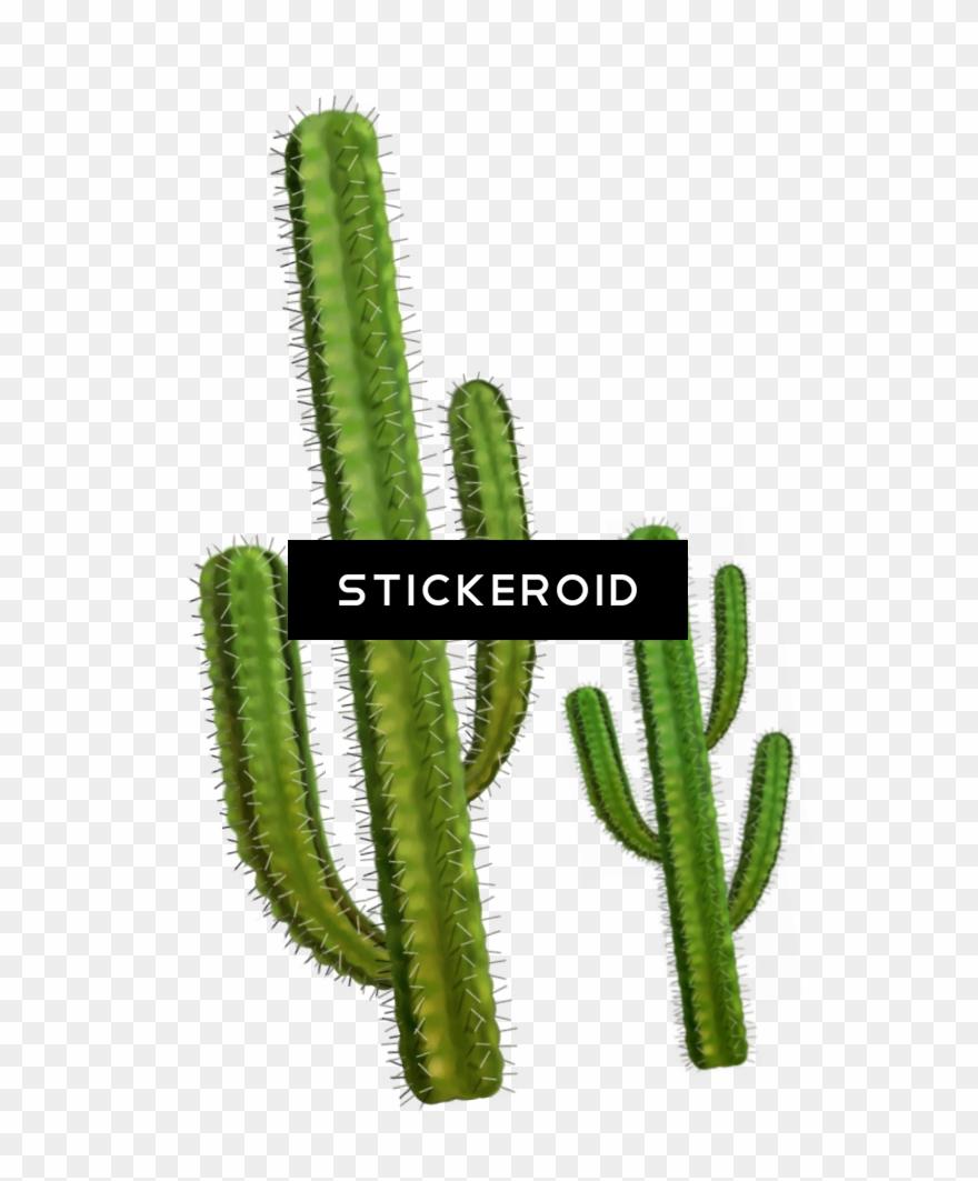 cactus # 4873007