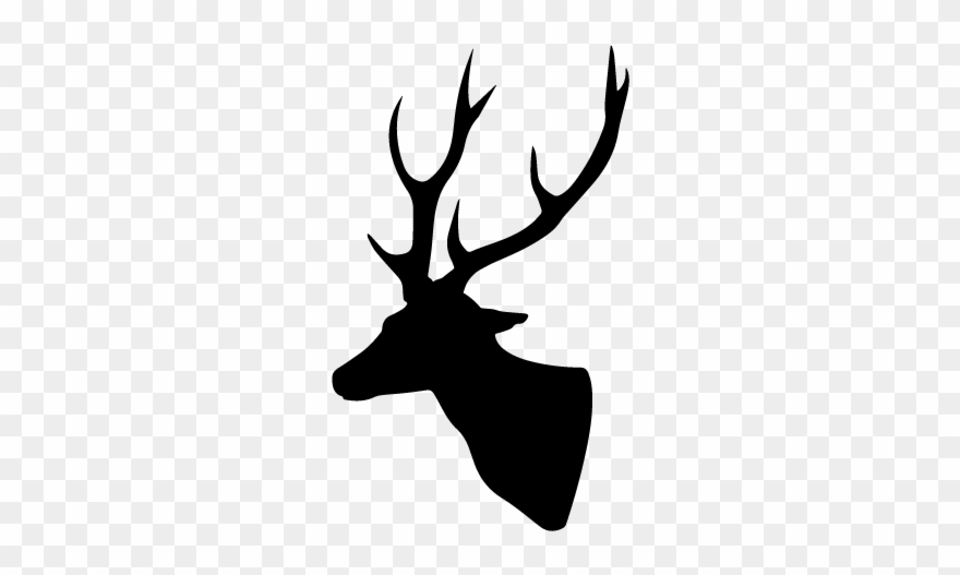 wildlife # 4871535