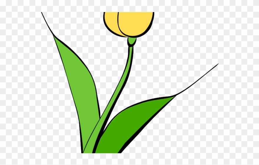 tulip # 4874127