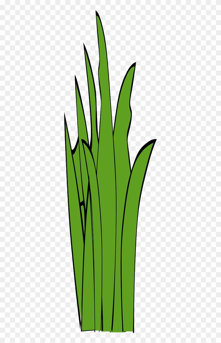 grass # 4872128