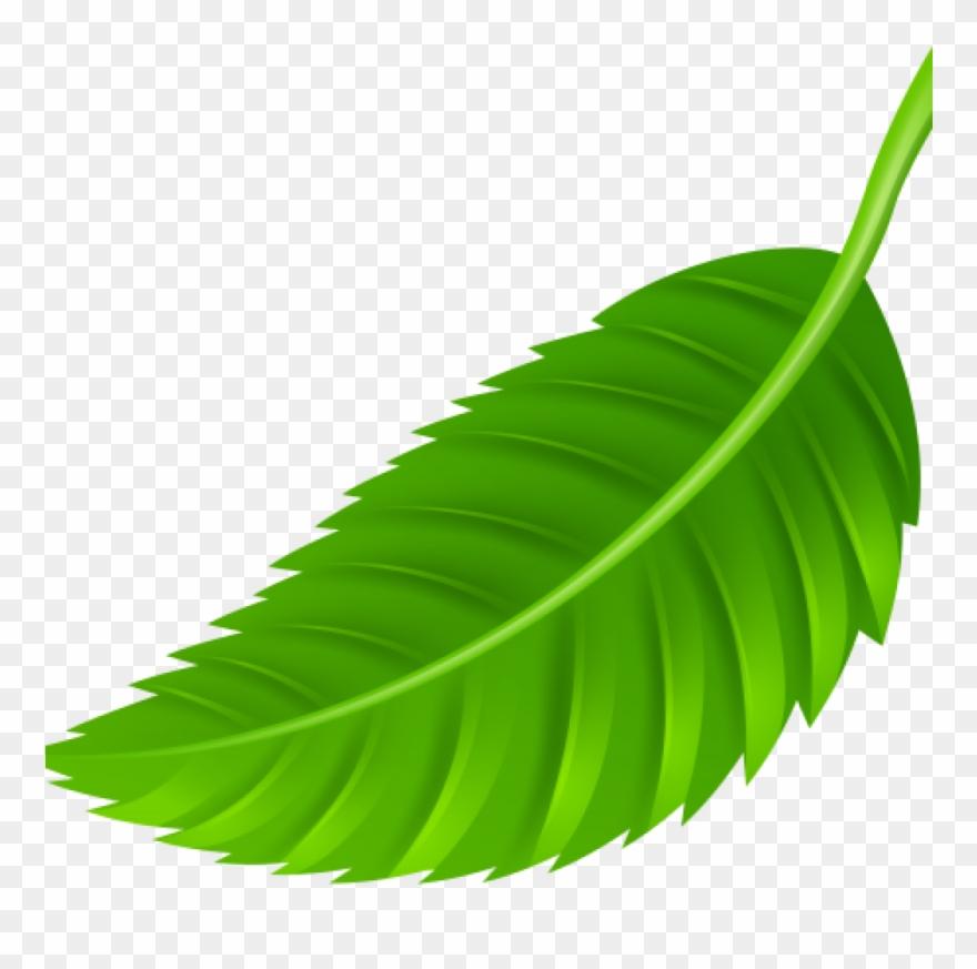 leaf # 4869412