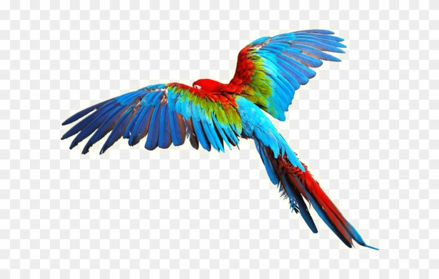 parrot # 4869261