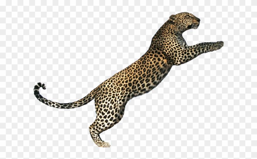 leopard # 4887280