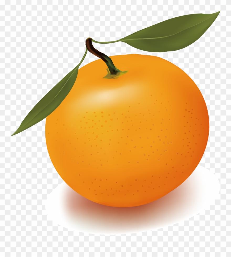 orange # 4886727