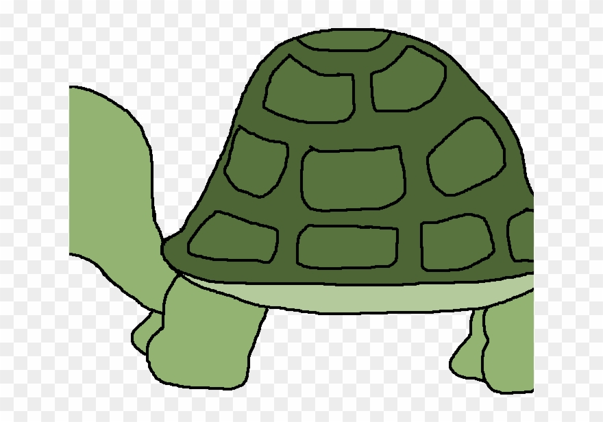 turtle # 4899488