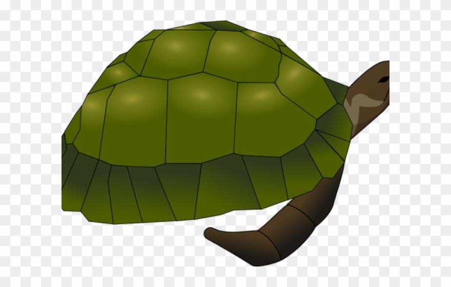 turtle # 4899421