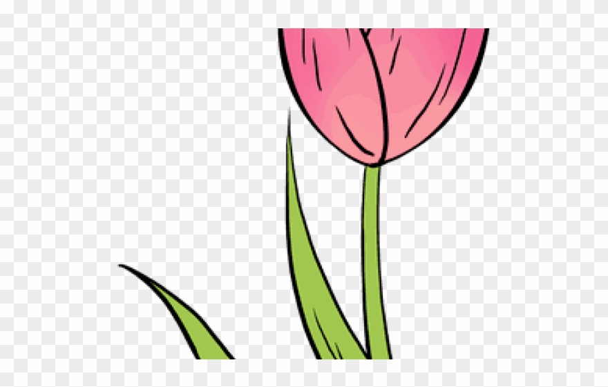 tulip # 4880540