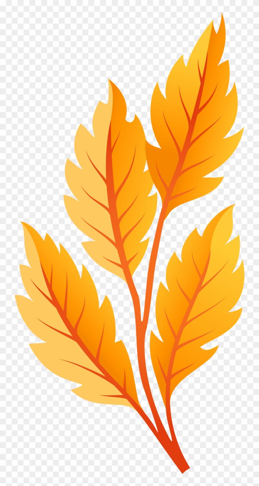 orange # 4877822