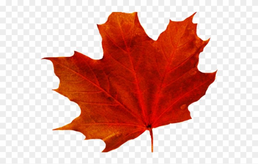 leaf # 4877799