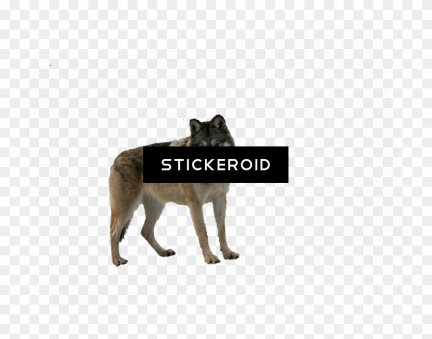 wolf # 4878912