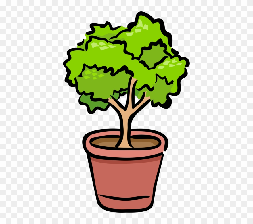 shrub # 5303997