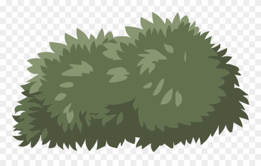 shrub # 5297403