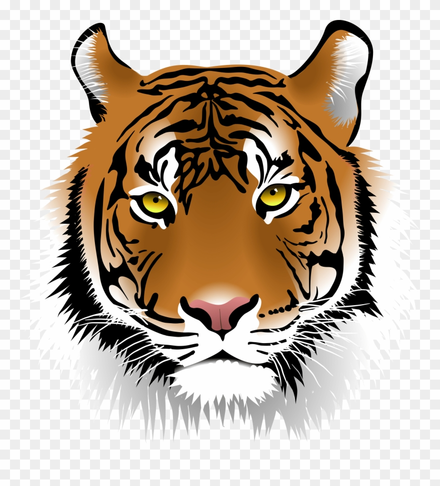 bengal-tiger # 5015043