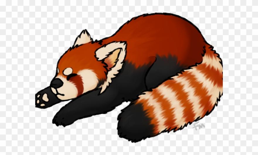 red-panda # 5194299