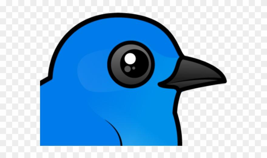eastern-bluebird # 5196243