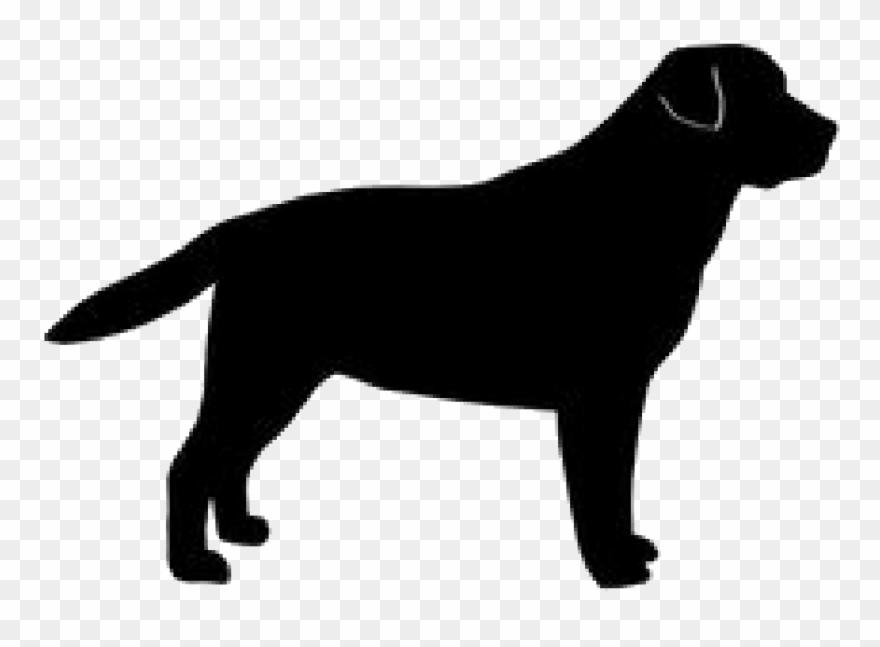 dog-breed # 5176962