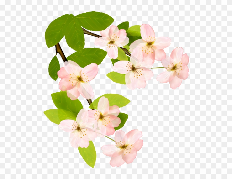 flowering-plant # 5126844