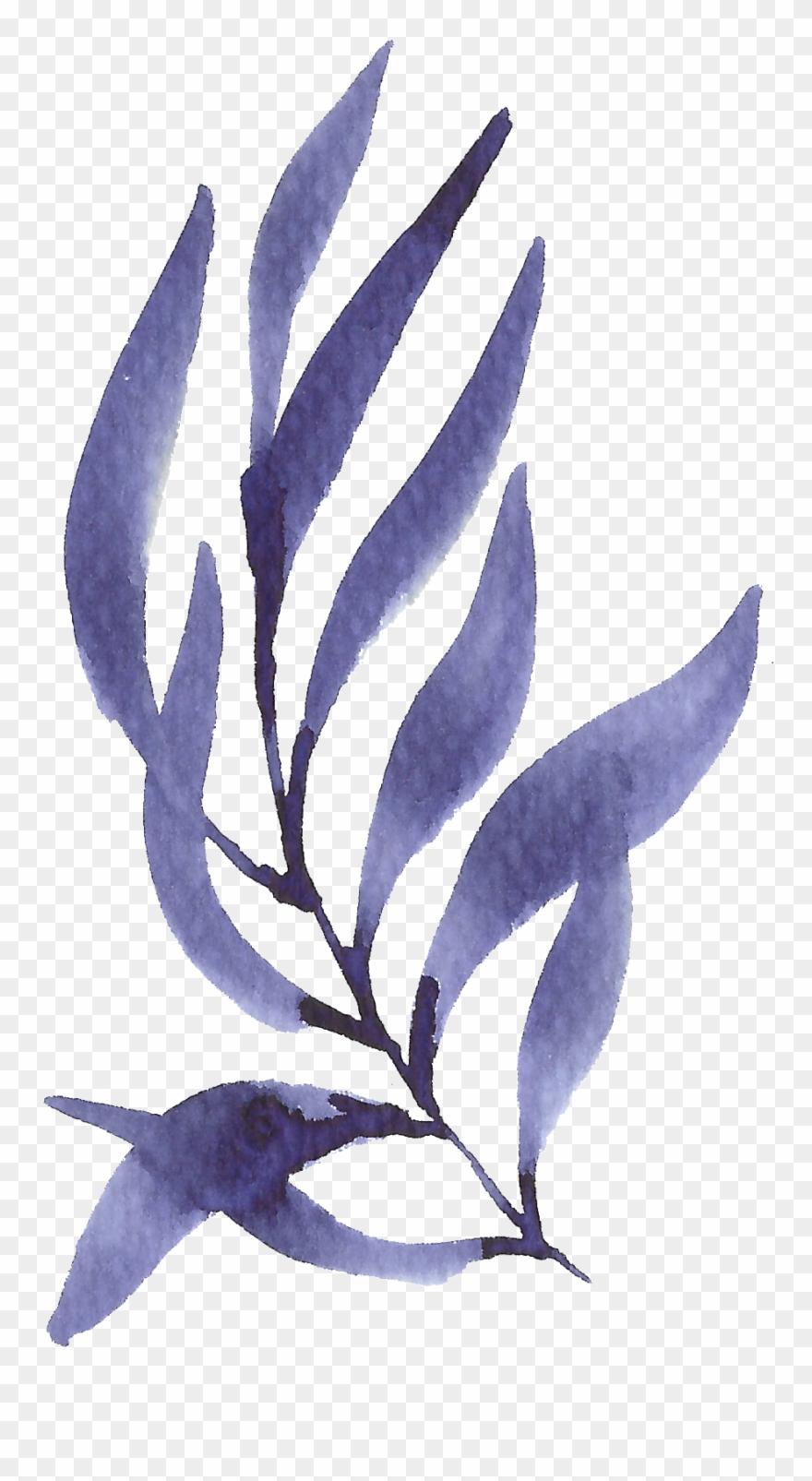 seaweed # 5130761