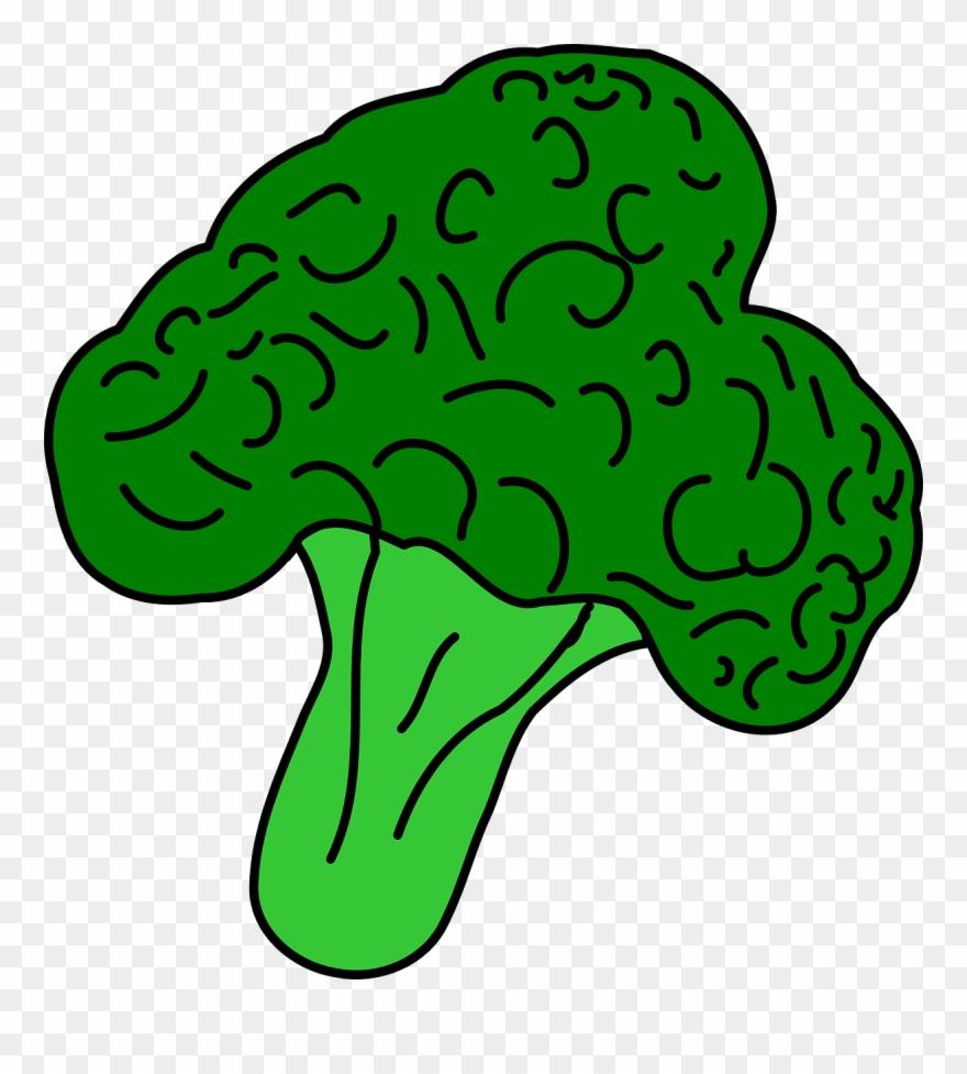 broccoli # 5213537