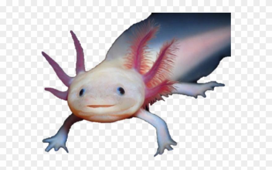 salamander # 5103910