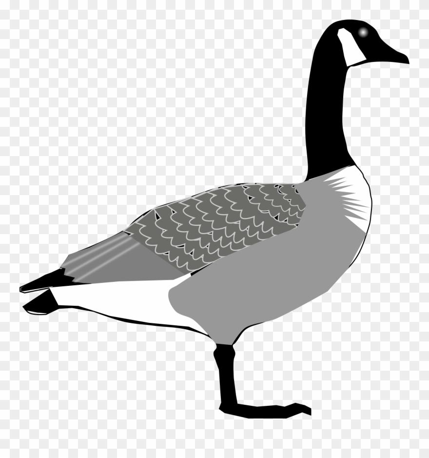 goose # 5103310
