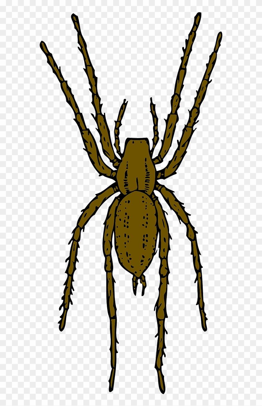 spider # 5225264