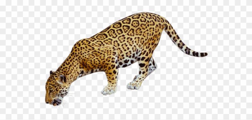 jaguar # 5142132