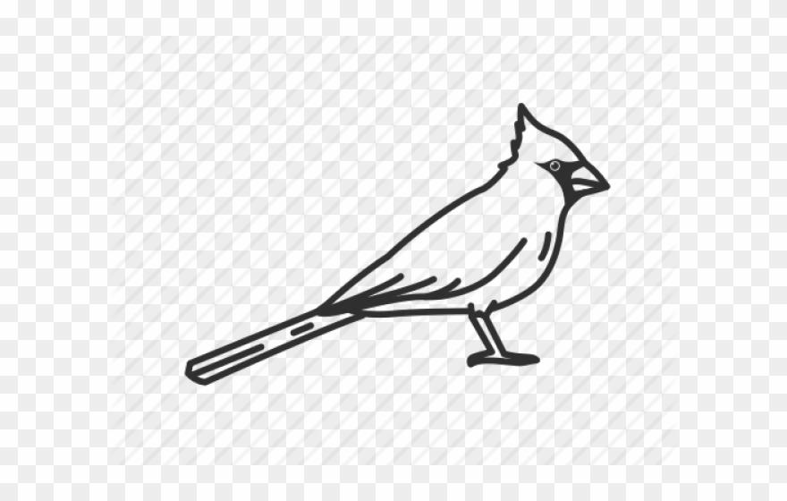 songbird # 5116070